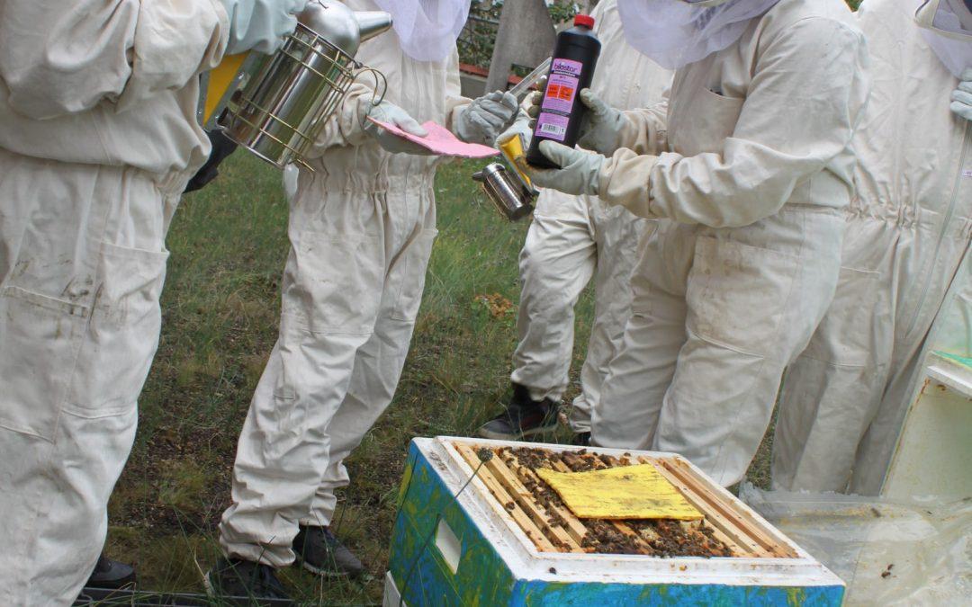 Fleißige Bienen an der GSS!