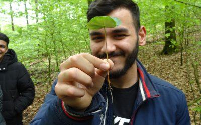 Grandios 'gescheiterte' Waldaktion